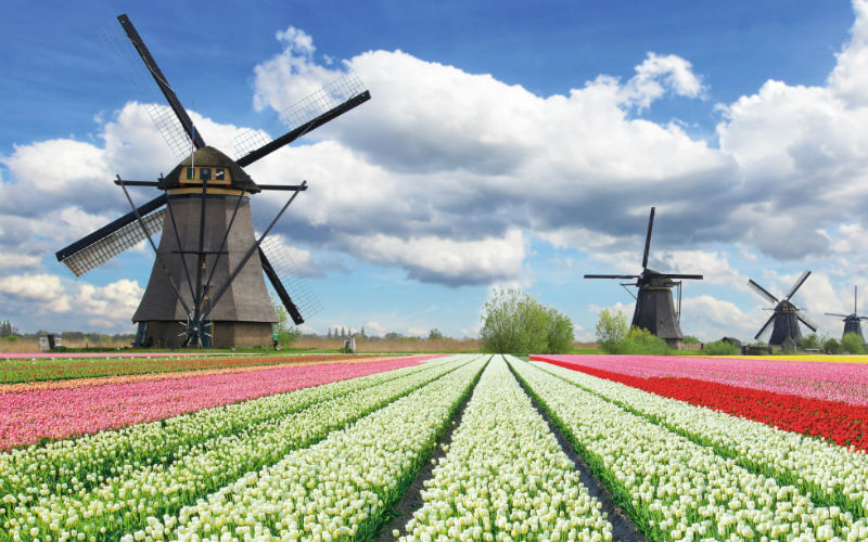 Amsterdam & floraison des tulipes 2