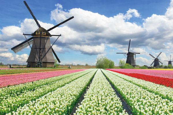 Amsterdam et les tulipes 4