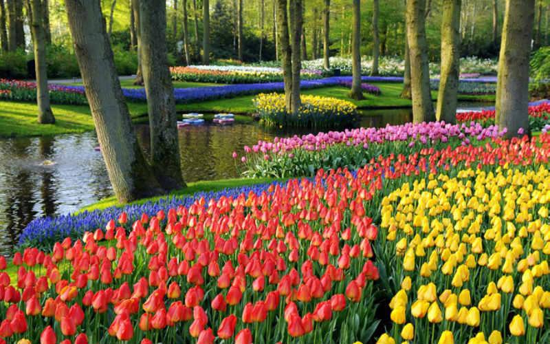 Amsterdam & floraison des tulipes 4