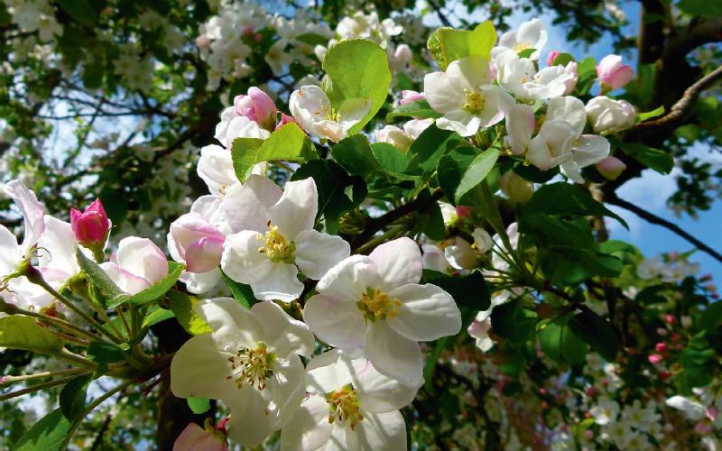 Blühender Frühling im Trentino 3