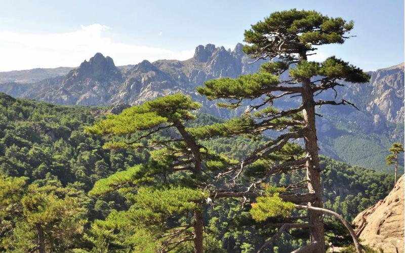Blühender Frühling auf Korsika 3