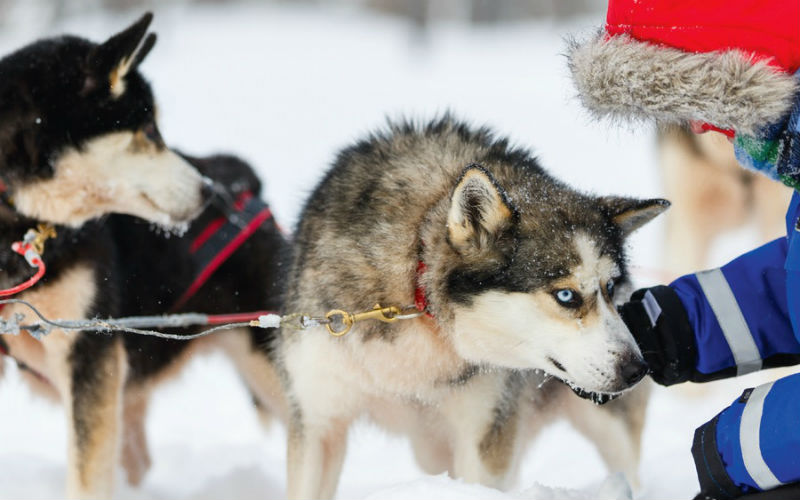 Wintertraum Lappland 5