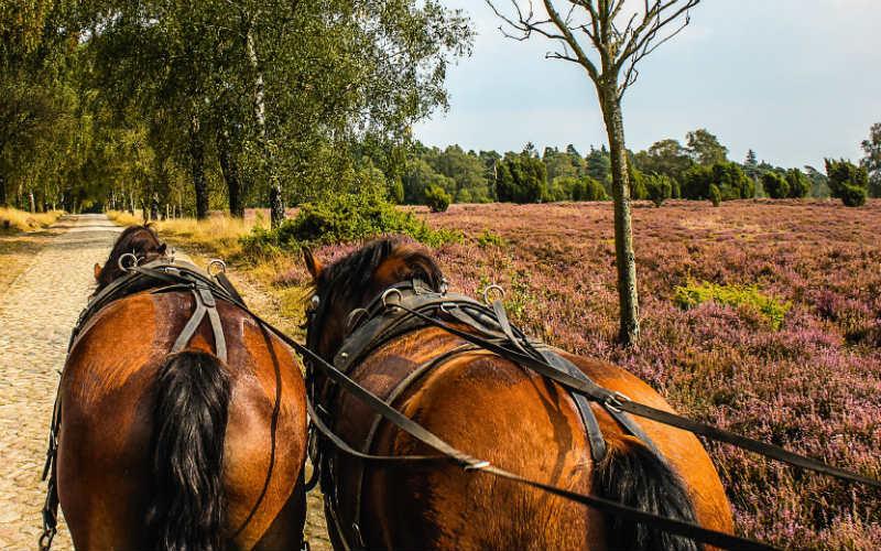Harz & Lüneburger Heide 3