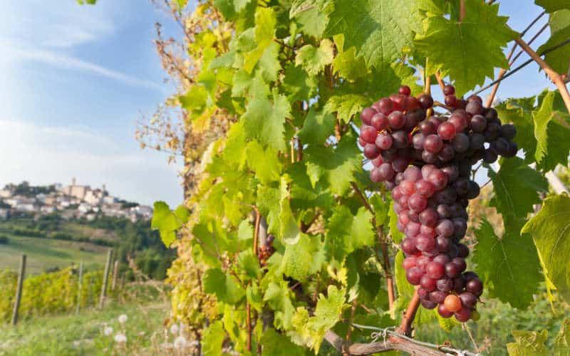 Genusswandern im Piemont 5