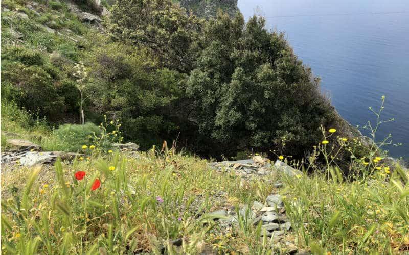 RB_ChristineAlbrecht_Korsika31
