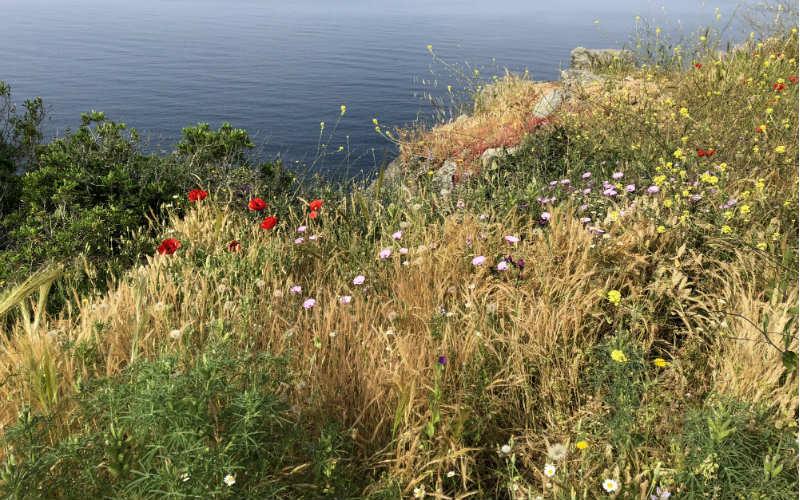RB_ChristineAlbrecht_Korsika68