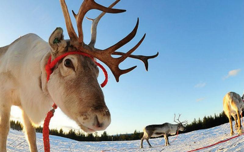 Wintertraum Lappland 3