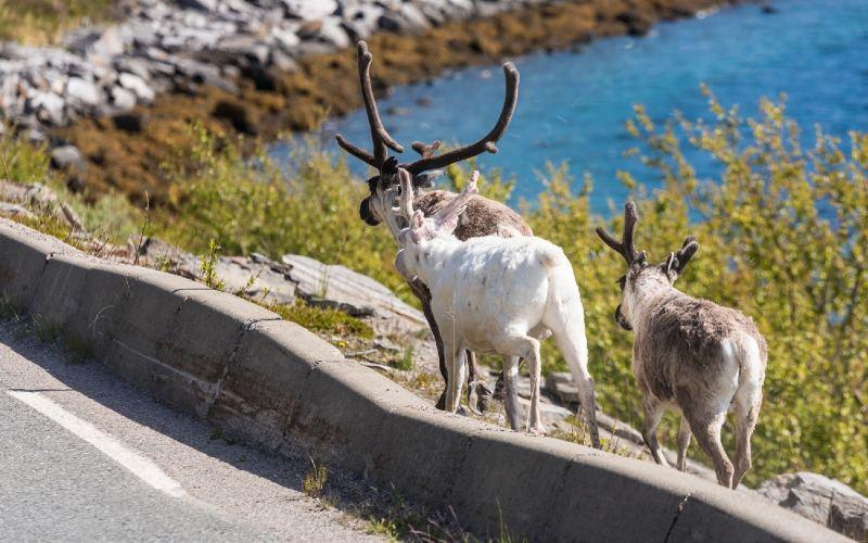 Fascination Cap Nord 10