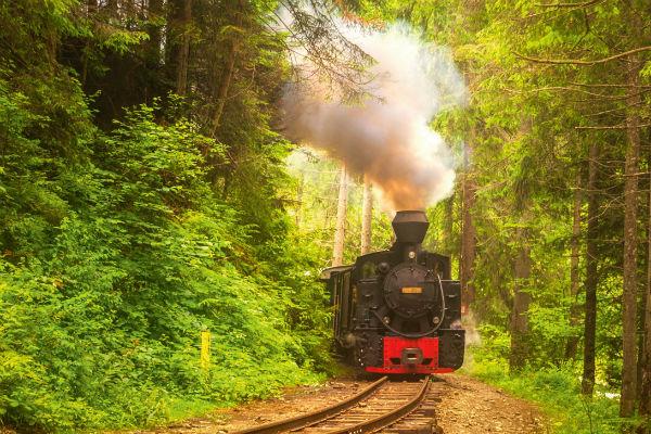 Unterwegs in den mystischen Wäldern Transsilvaniens 1