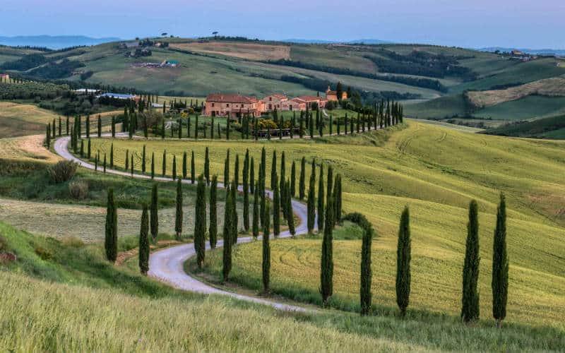 Récolte des olives en Toscane 5