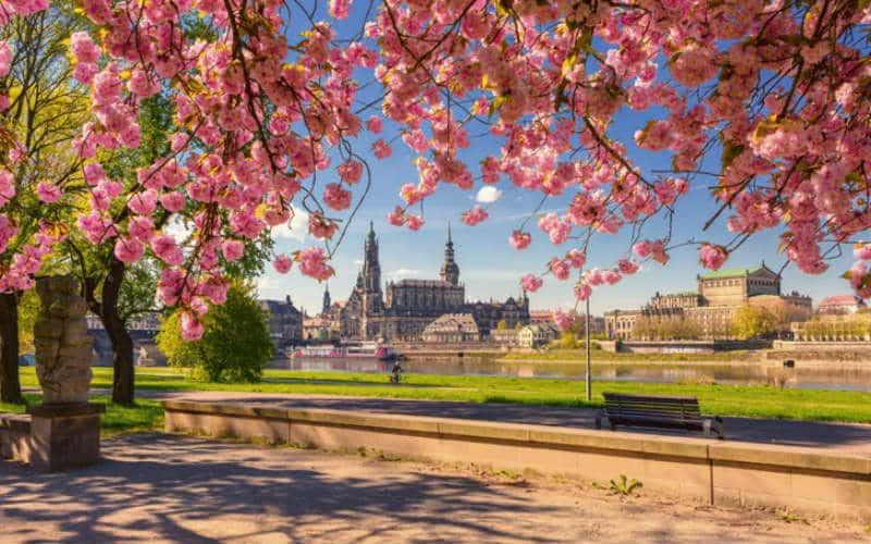 Wunderschönes Dresden 800x500