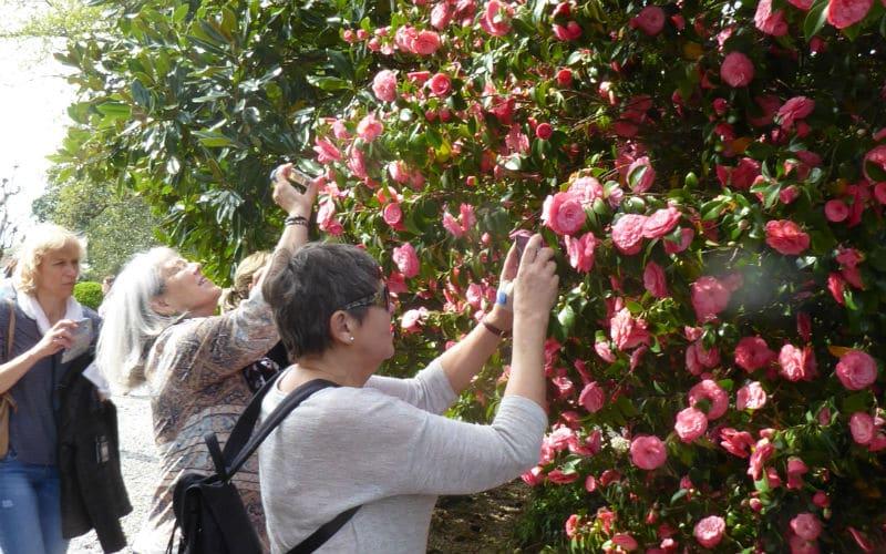 rb-kamelienblüte-Arn-Laesser8