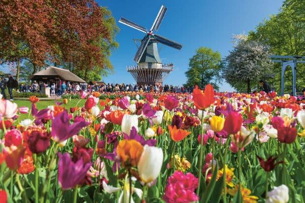 Amsterdam et les tulipes 2