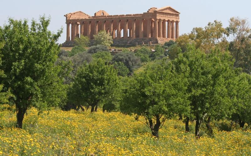 Mandelblüte auf Sizilien 2