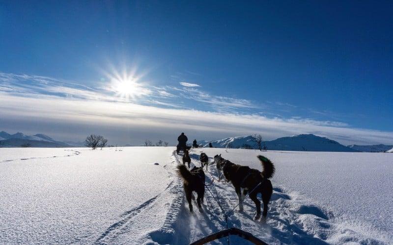 Mehrere Schlittenhunde Fahren Am Nordkap Der Sonne Entgegen