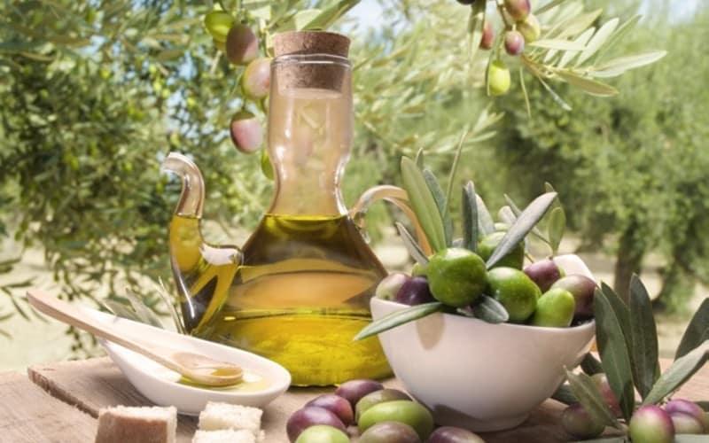 Récolte des olives en Toscane 2