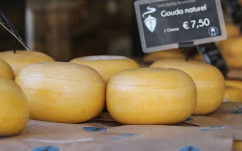 Frühlingsflussfahrt - Käse, Tulpen & Windmühlen 4